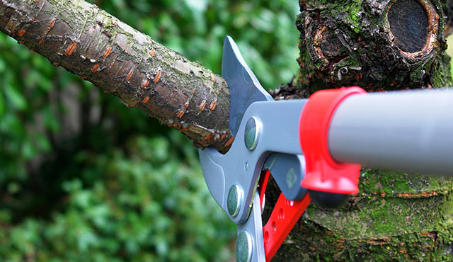 tree pruning service in fort worth tx
