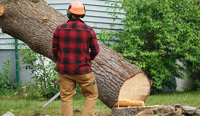 tree removal service fort worth