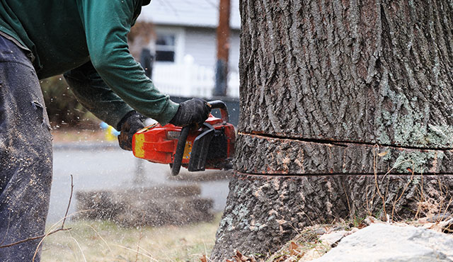 fort worth tree service